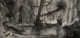 19th century engraving depictin the Swamps of Ocklawaha, Florida