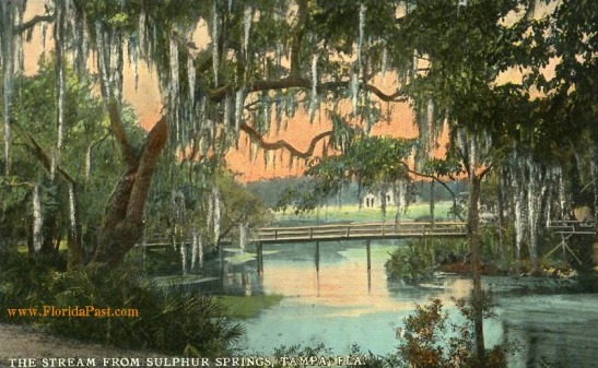 THE STREAM FROM SULPHUR SPRINGS, TAMPA FLORIDA